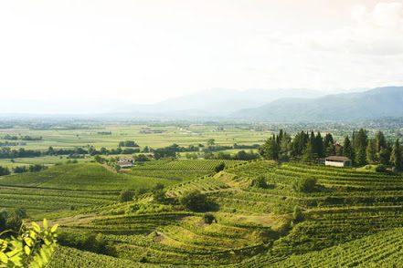 Degustazione e tour dei vini del Collio