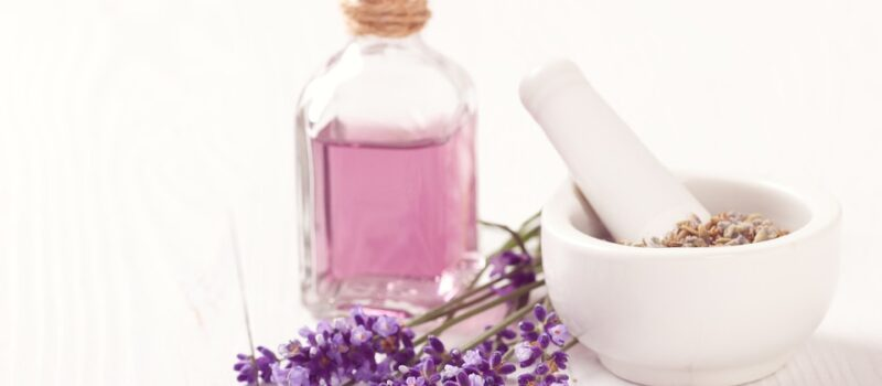La violetta di Parma: da leggenda a fragranza