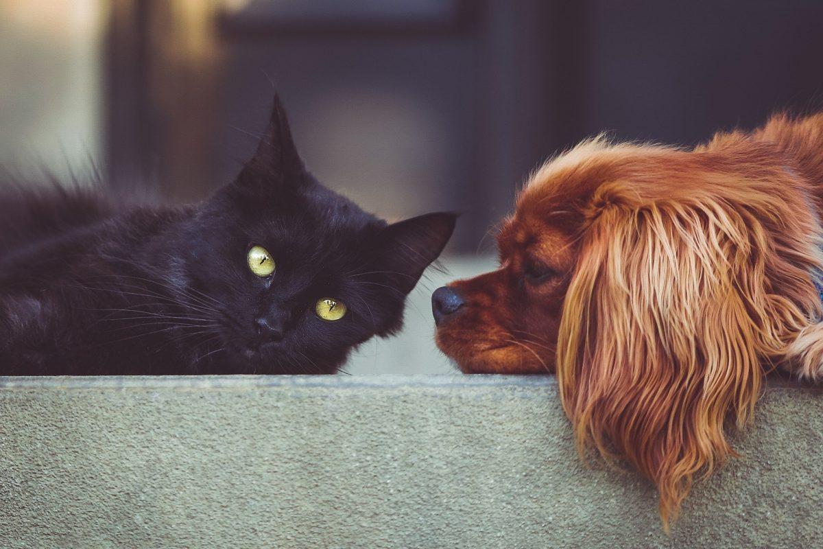 I consigli per cane e gatto in estate